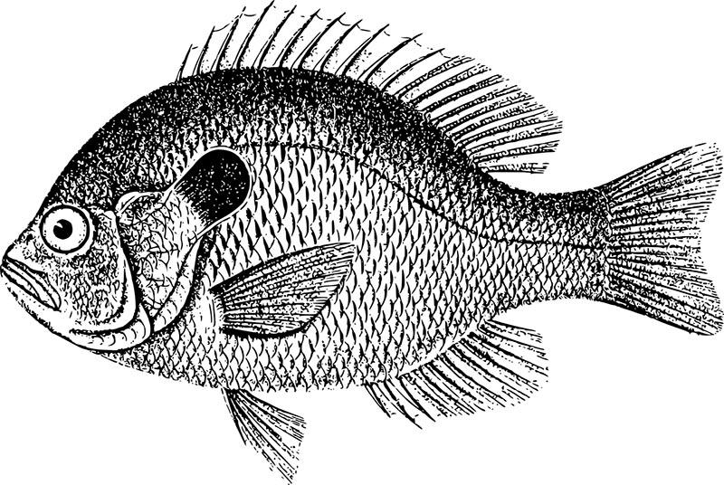 Fischerprüfung Düren Fischereischein Düren Karpfen
