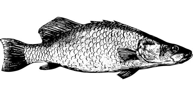 Fischerprüfung Neuss Tanganyika Fischbestimmung