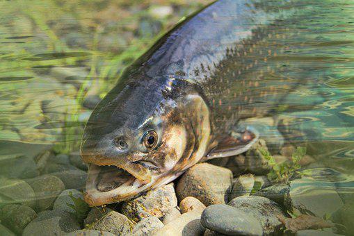 Angelschein Reutlingen - Fisch an Land