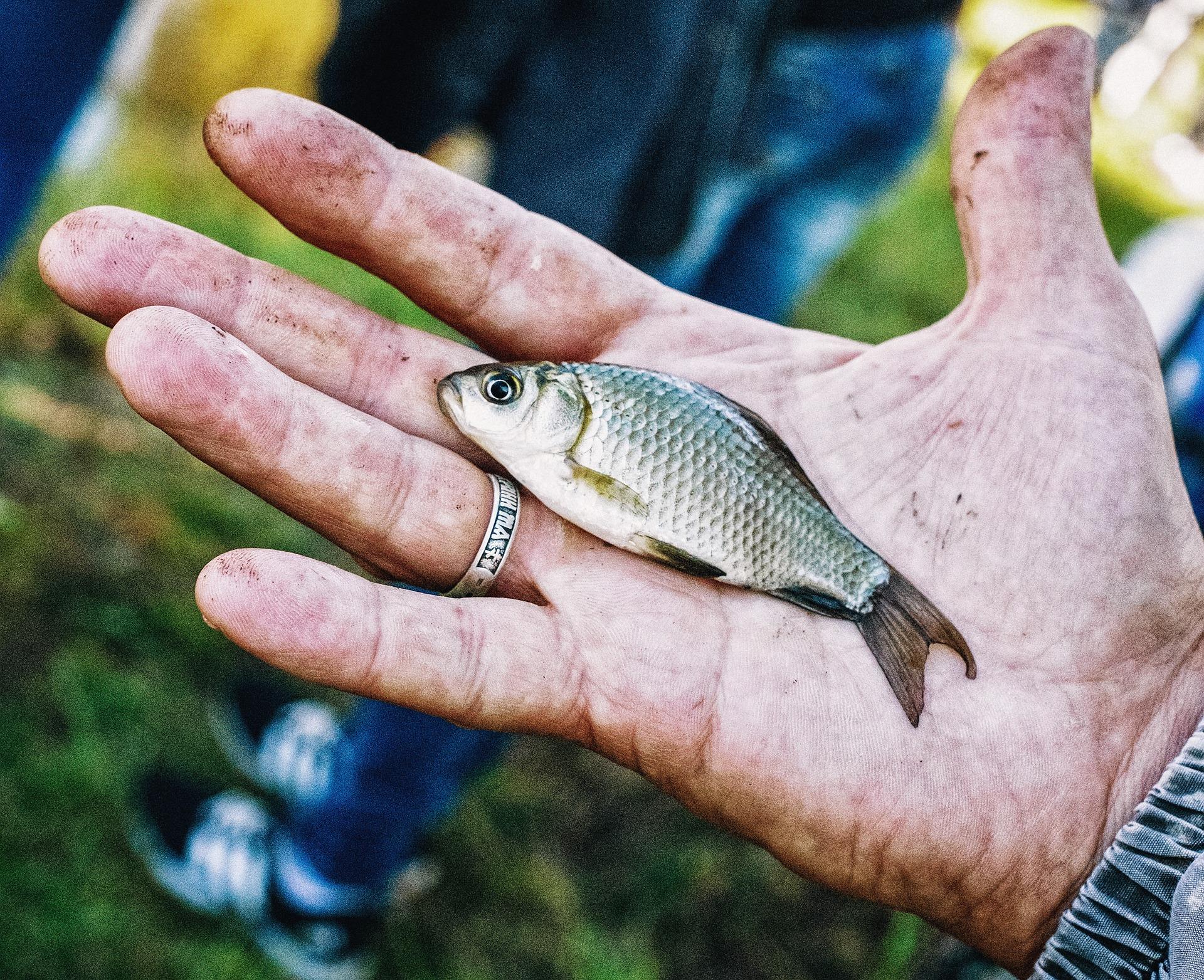 Angelschein Gummersbach - kleiner Fisch