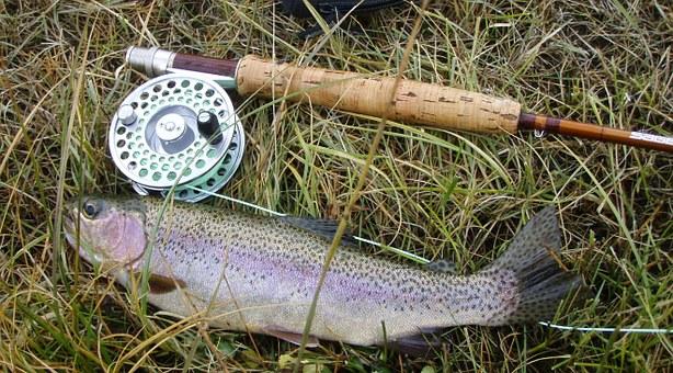 Angelschein Starnberg - Angler fisch