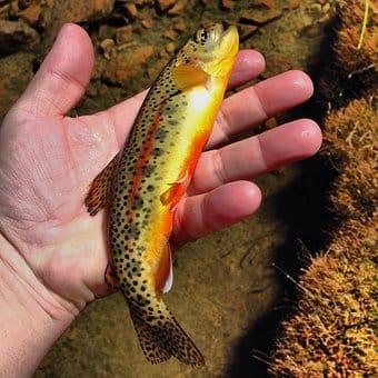 Angelschein Starnberg - Fisch